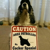 #cockerspaniel #dogsign #caution #コッカースパニエル #ドッグサイン #犬看板 #警告