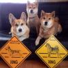 #dog #corgi #shibainu #xing #signboard #犬 #コーギー #柴犬 #看板 #番犬