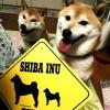 #柴犬 #サインボード #2頭 #看板 #XING #画像