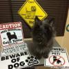 #ケアーンテリア #看板 #サインボード #Cairn Terrier #写真 #画像