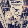 #siberianhusky #husky #signboard #warning #シベリアンハスキー #ハスキー #サインボード #看板