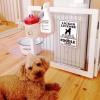 #poodle #signboard #usa #プードル #サインボード #看板 #アメリカン