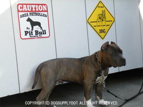 CAUTION サインボード:ピットブル(Pit Bull)