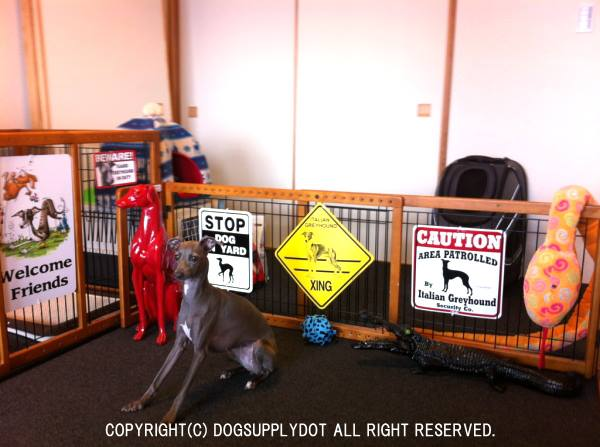 CAUTION サインボード:イタリアングレイハウンド(Italian Greyhound)