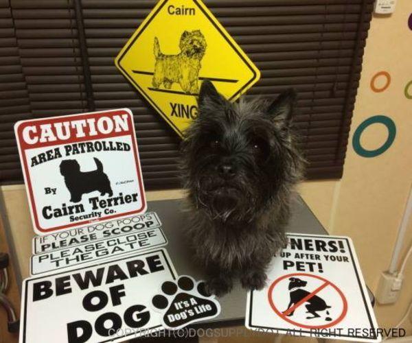 CAUTION サインボード:ケアーンテリア(Cairn Terrier)