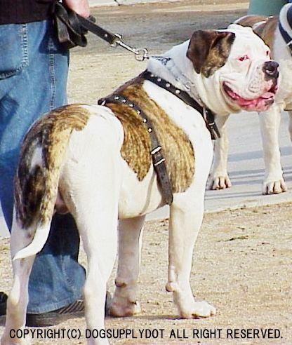 大型犬,レザーハーネス,胴輪,スタッズ鋲,牛本革使用,アメリカ製