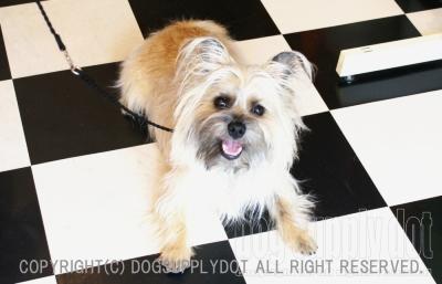 ツイスト チョークリード:パラシュート素材の犬しつけ用首輪リード
