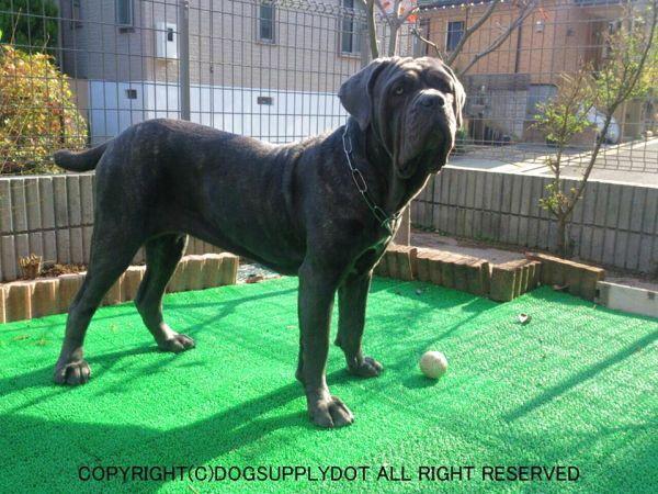 エリプスリング チョークチェーン:マスティフ(大型犬)