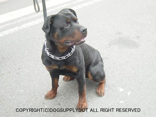 スパイクチョーク:ロットワイラー(犬の訓練用チョークチェーン首輪)
