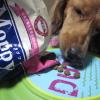 #dog #dachs #dachshund #dogfood #moppy #犬 #ダックス #ダックスフンド #ドッグフード #モッピー