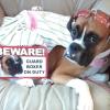 #boxer #signboard #onduty #beware #ボクサー #サインボード #看板 #アメリカン