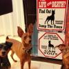 #miniaturepinscher #signboard #canyou #securitydog #ミニピン #ミニチュアピンシャー #アメリカ #看板 #サインボード