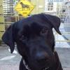 #labradorretriever #blacklab #signboard #xing #ラブラドールレトリバー #ブラックラブ #黒ラブ #サインボード #看板 #アメリカ