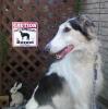 #borzoi #signboard #caution #ボルゾイ #サインボード #看板 #サイトハウンド #番犬