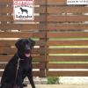 labradorretriever #blacklab #signboard #caution #ラブラドールレトリバー #ブラックラブ #黒ラブ  #サインボード #看板 #番犬