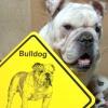 #bulldog #signboard #xing #ブルドック #看板 #サインボード