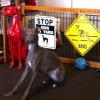 #italiangreyhound #signboard #xing #イタリアングレーハウンド #イタグレ #看板 #サインボード