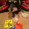#schnauzer #signboard #dogsign #dogtoy #シュナウザー #シュナ #犬看板  #ドッグサイン #犬おもちゃ #ドッグトイ