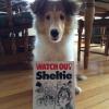 #sheltie #shetlandsheepdog #watch out #signboard #シェルティー #シェットランドシープドック #看板 #アメリカ
