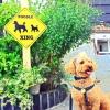 #poodle #signboard #xing #プードル #サインボード #看板 #横断中