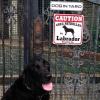 #ラブラドール #黒ラブ #ブラックラブ #犬が庭にいます #サインボード #看板 #lab #blacklab #labrador #signboard #caution #doginyard