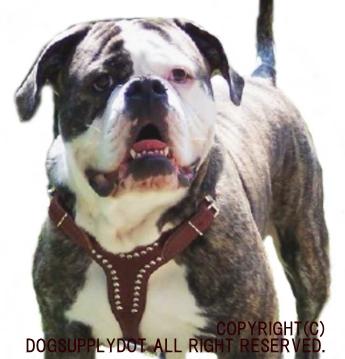 アメリカ,大型犬,ビッグドッグ,レザーハーネス,胴輪,スタッズ鋲,牛革