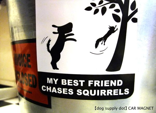 MY BEST FRIEND CHASES SQUIRRELS カーマグネット