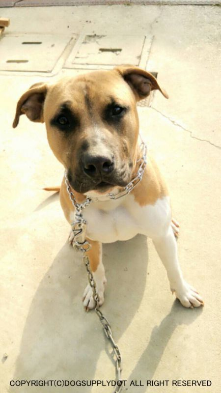 スパイクチョーク,大型犬,訓練用,チョークチェーン,トレーニング首輪