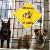 #dog #dorberman #bulldog #signboard #onguard  #犬 #ドーベルマン #ブルドック #サインボード #看板 #番犬