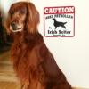 #dog #irishsetter #signboard #caution #犬 #アイリッシュセッター #サインボード #看板