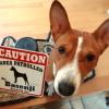 #basenji #signboard #caution #バセンジー #サインボード #看板 #アメリカン
