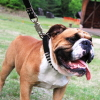 #bulldog #black #leather #spike #ブルドック #首輪 #レザー #リード #スパイク #アメリカ