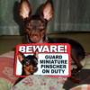 #miniaturepinscher #signboard #beware #onduty  #minpin #ミニピン #ミニチュアピンシャー #ミニピン #アメリカ #サインボード #看板