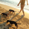 #dachs #dachshund #showlead #chokelead #dogshow #ダックス #ダックスフンド #ショーリード #チョークリード #ドックショー